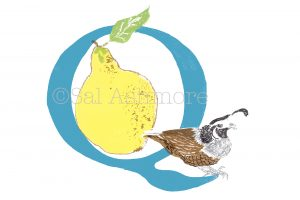 Story Letter Print Q - Quince and the Quail